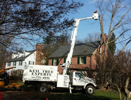 Tree Care Industry Safety Hazards