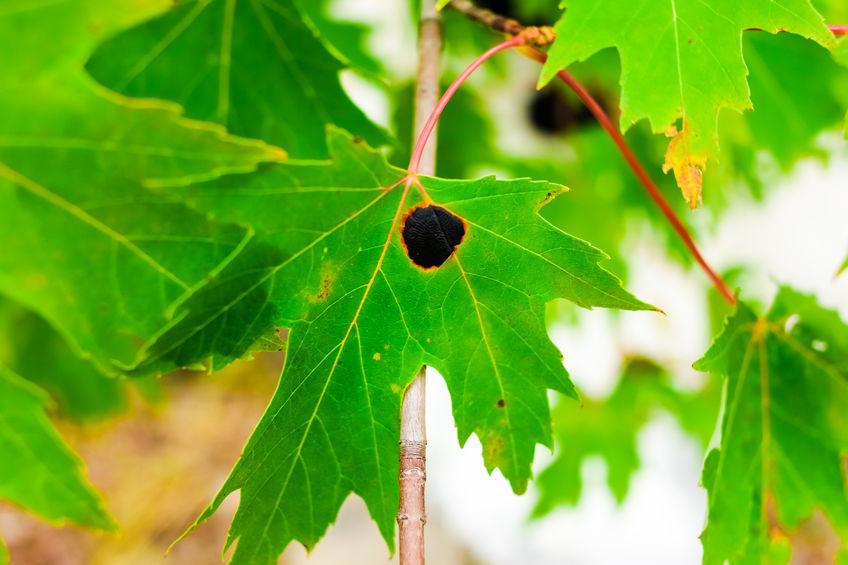 Leaf Damage: Common Causes