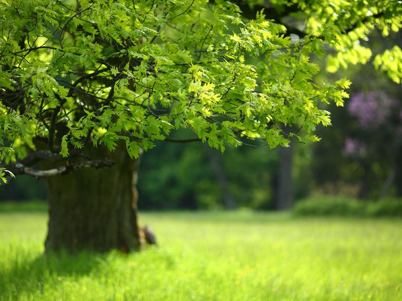 Tree Care - Keil Tree
