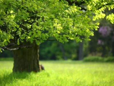 Lawn Maintenance Tips - Keil Tree