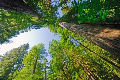Caring for Mature Trees - Keil Tree