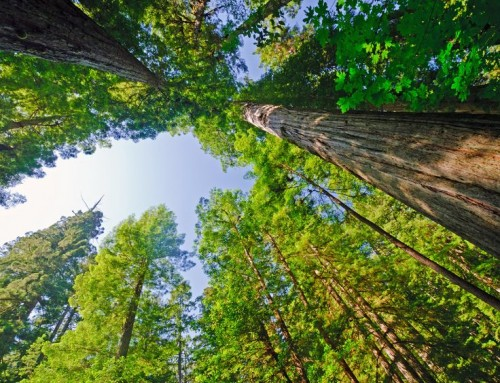 Caring for Mature Trees to Prevent Increased Risk