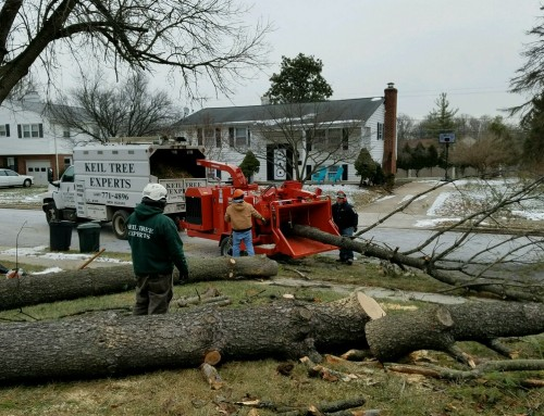 Preventative Tree Care to Avoid Fall Damage