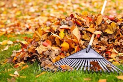 Raking Leaves - Keil Tree