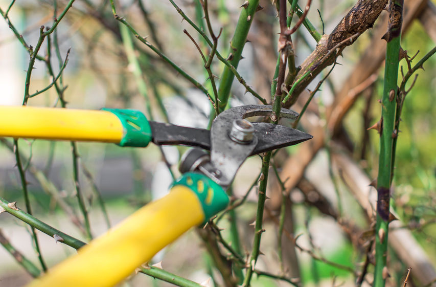 Pruning Your Trees Is a Job for a Professional