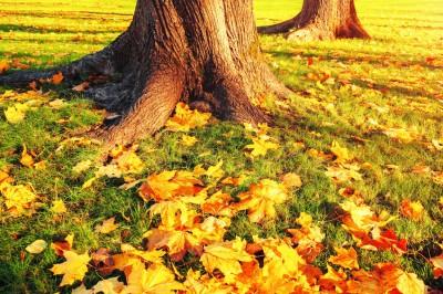 Tree Fertilization - Keil Tree