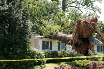 Tree Hazards - Keil Tree
