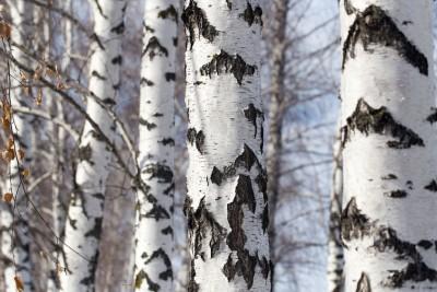 Tree Branches - Keil Tree