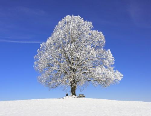 Winter Tree Care Concerns