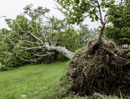 Prevent Trees from Falling in Your Yard