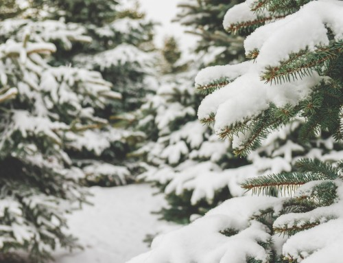 Winter Tree Care Provided by Keil Tree