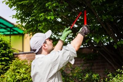 Pruning Trees - Keil Tree