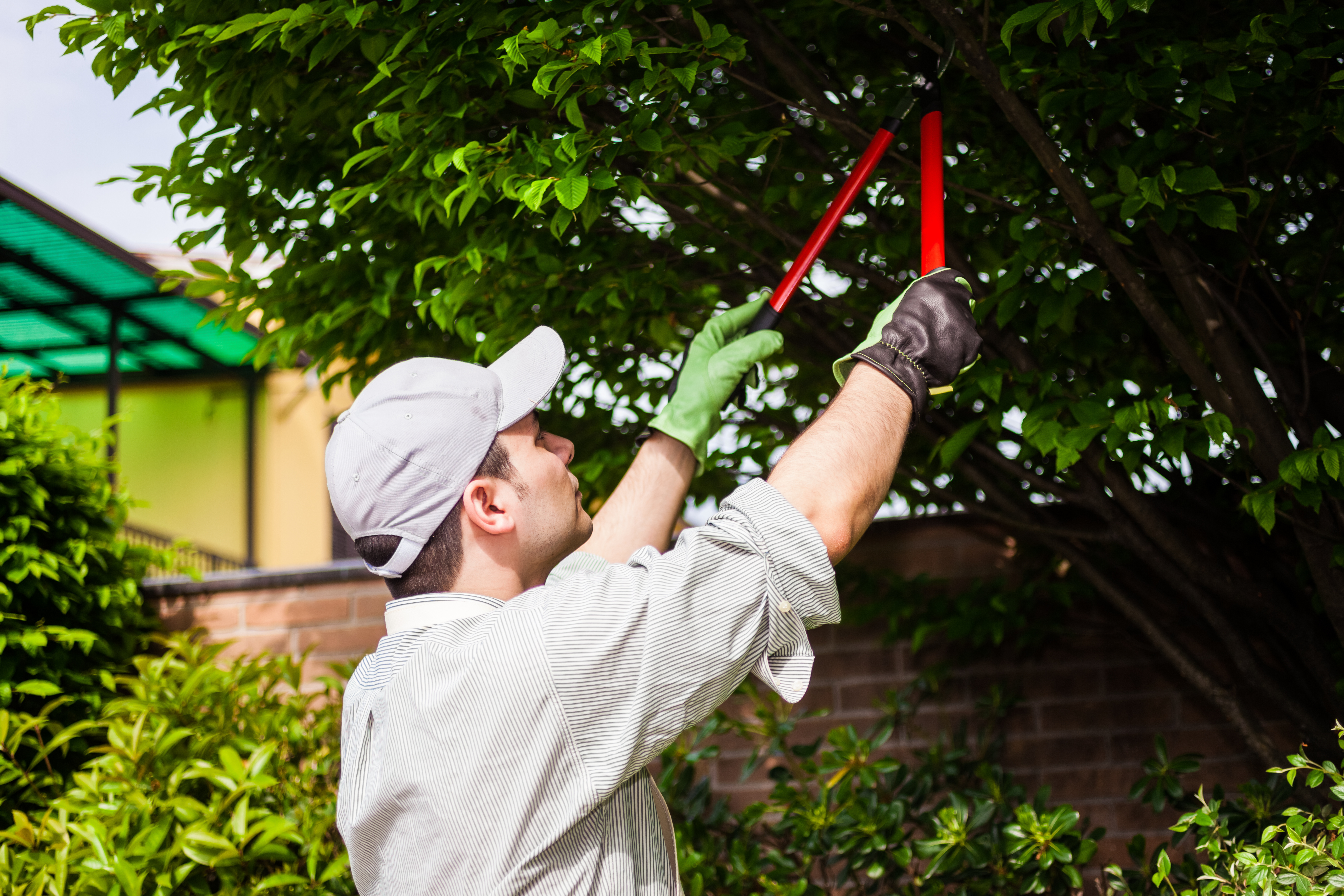 Pruning Trees to Avoid Fire Hazards