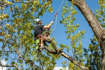 Tree Trimming in Baltimore - Keil Tree