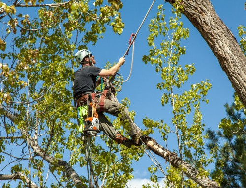 Tree Trimming in Baltimore Geared Toward Safety