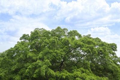 Tree Service in Freeland - Keil Tree