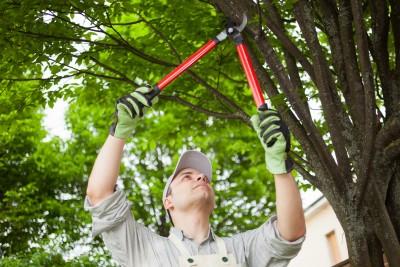 tree service in Parkville