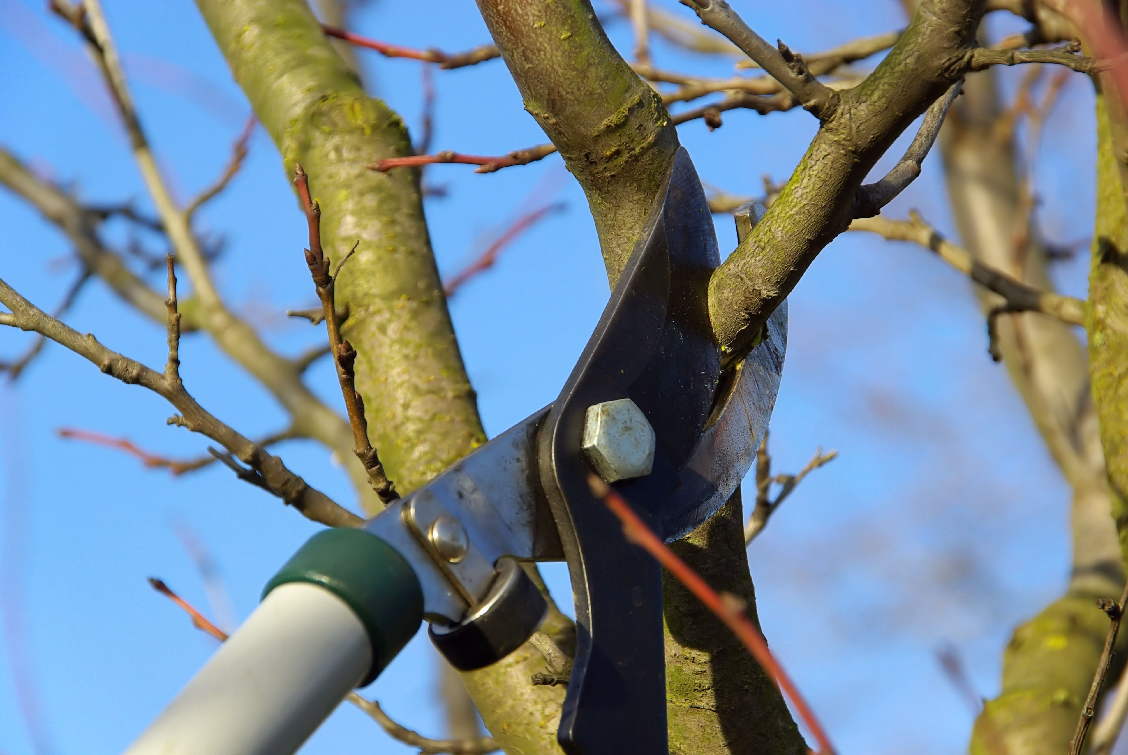 Tree Service in Sparks Shares How Often to Prune Trees