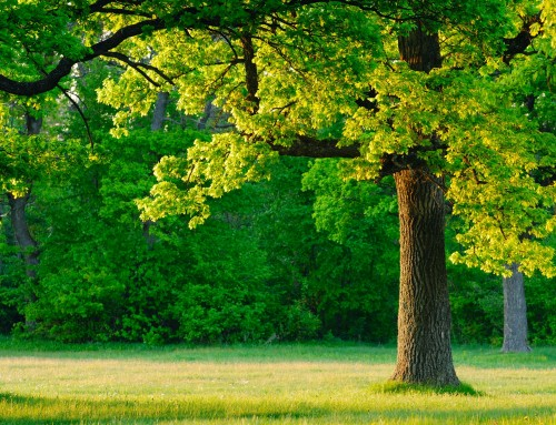 Tree Service in Parkville MD Provides Summer Tree Care