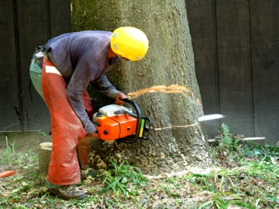tree removal in Baltimore County