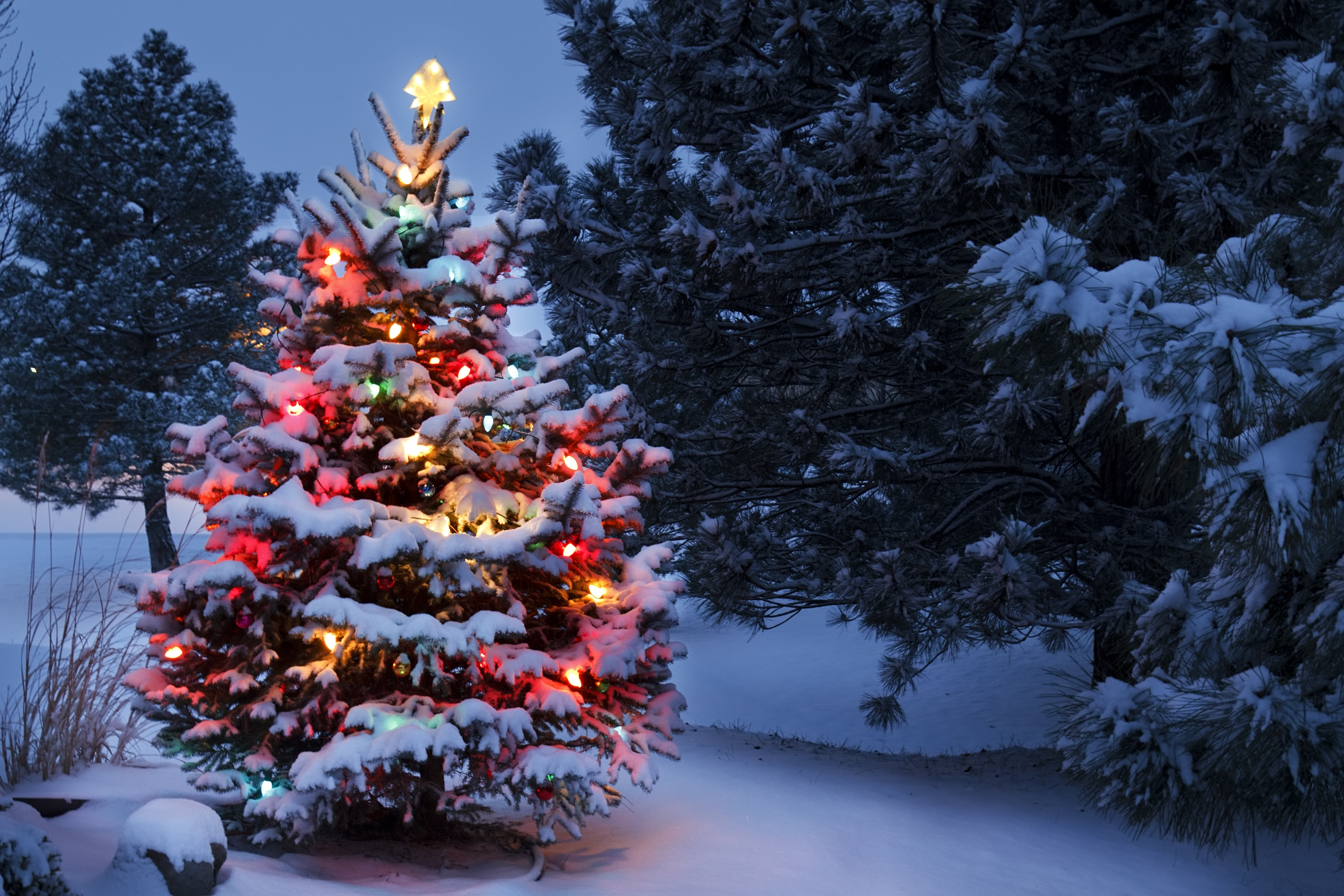 Tree Service In Sparks Md Explores Outdoor Tree Lighting Safety