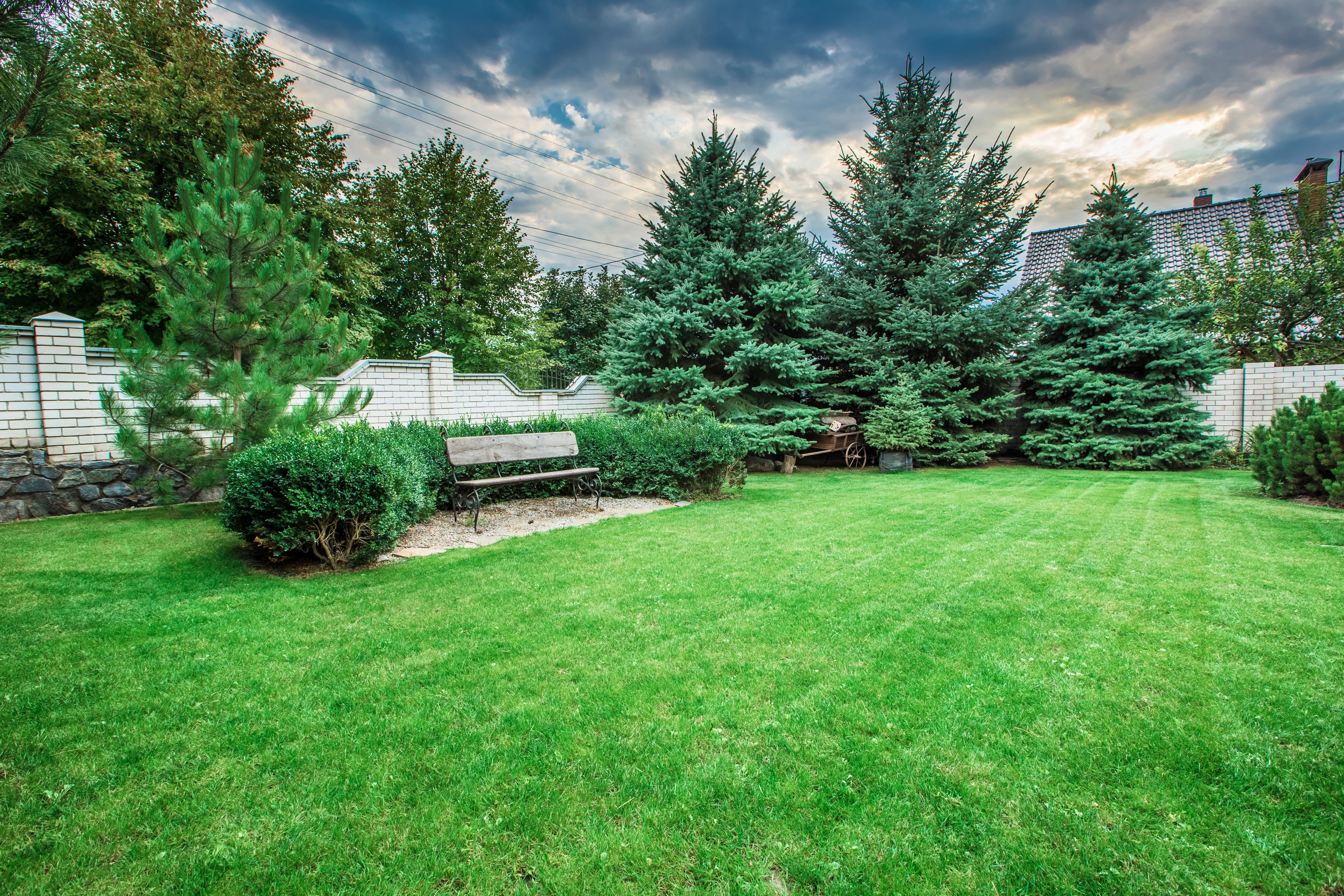 Evergreen Trees: Types and Varieties