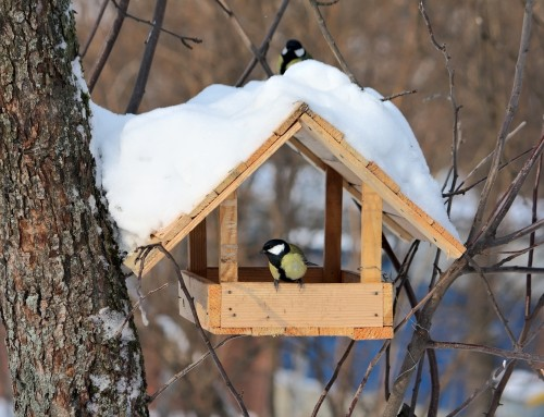 Tips to Attract Birds in the Winter