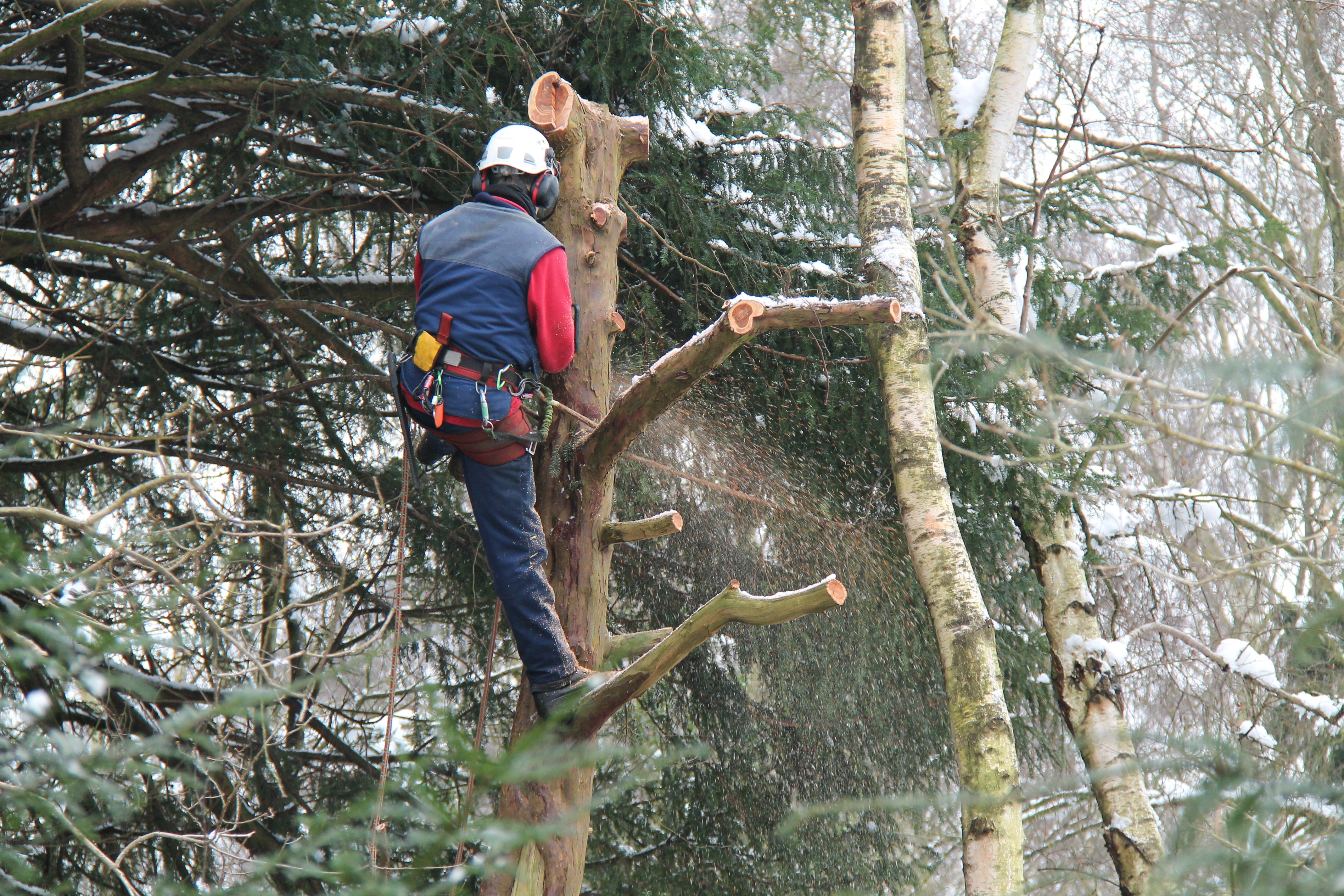 Pruning Trees in the Winter