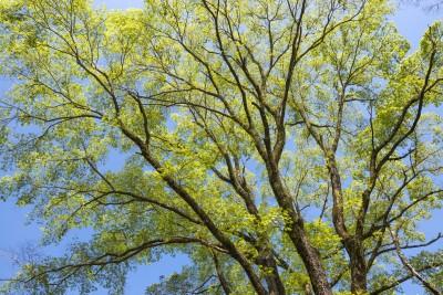 tree service in Owings Mills MD -- Keil Tree Experts