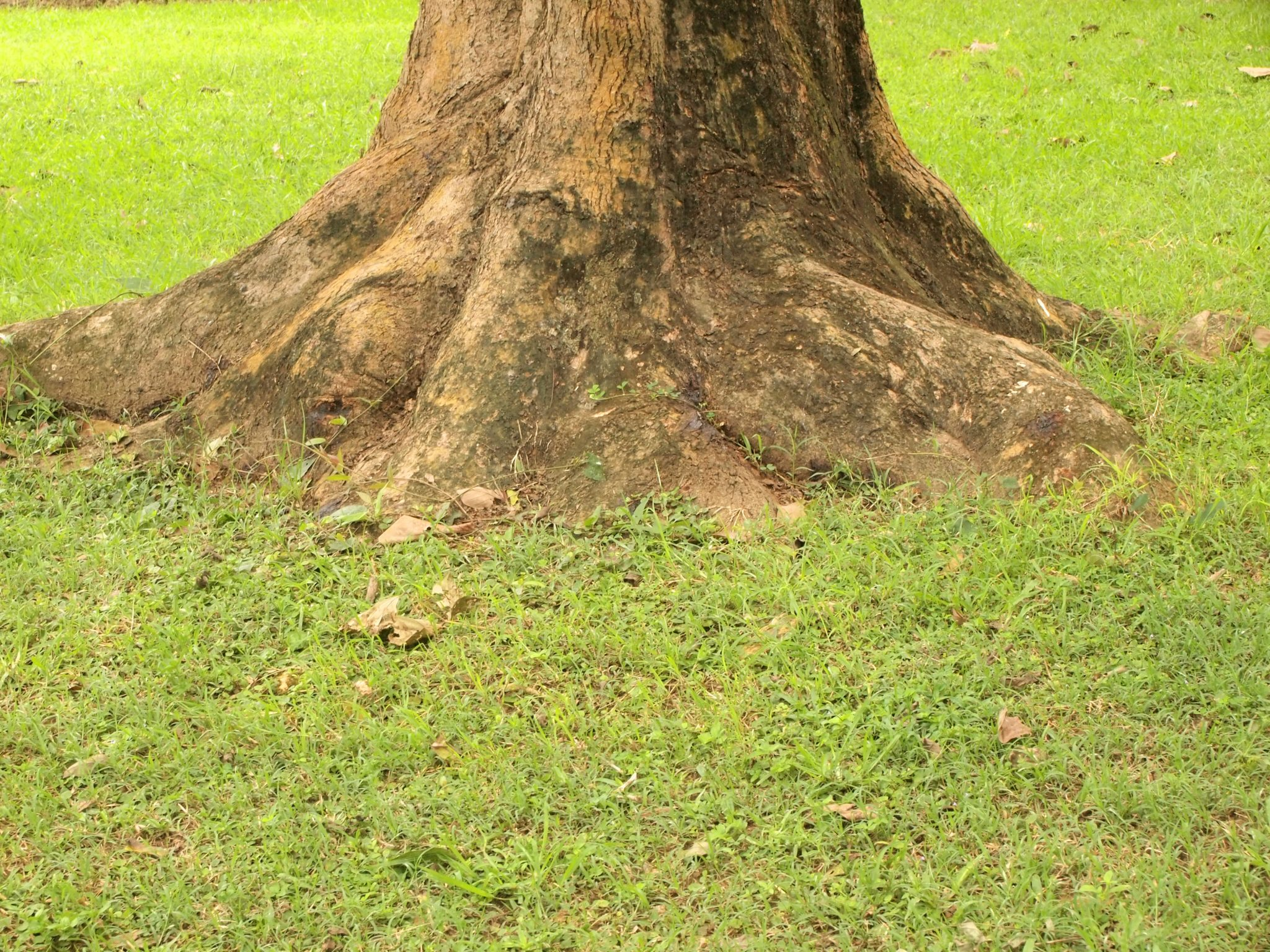 Your Tree Has a Trunk Wound. Now What?
