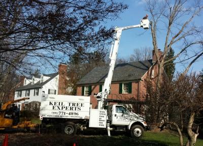 tree service in Owings Mills - Keil Tree Experts