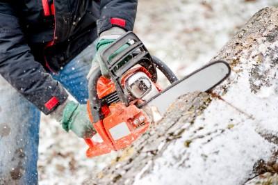 tree removal in Baldwin -- Keil Tree Experts