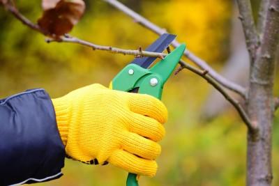 tree trimming baltimore -- Keil Tree Experts
