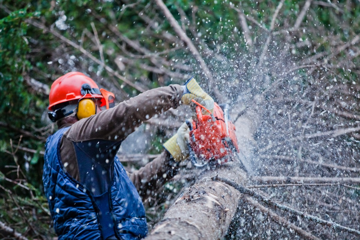 tree removal in Lutherville -- Keil Tree Experts