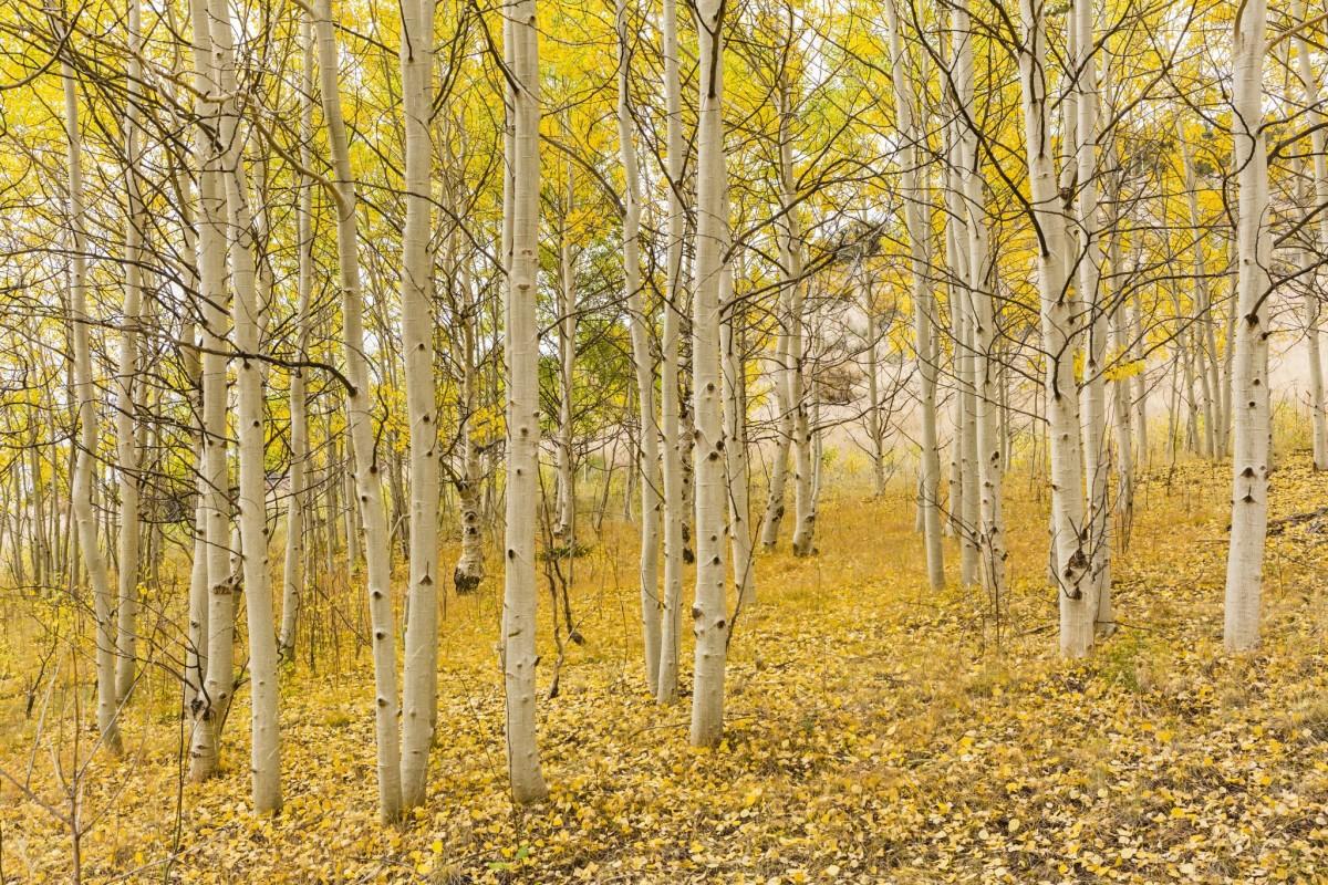 tree removal in Phoenix -- Keil Tree Experts