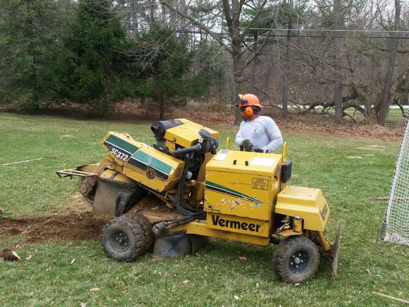 tree stump removal in Carney MD -- Keil Tree Experts