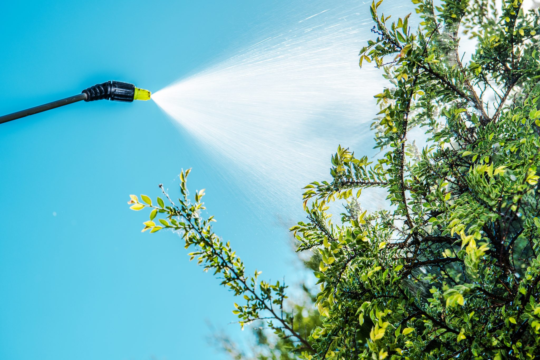 Tree Service Provides Treatment for Scale Insects