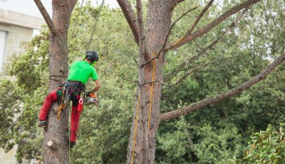 tree removal in Baltimore -- Keil Tree Experts