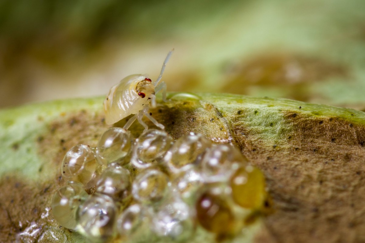 tree service in Owings Mills -- Keil Tree Experts