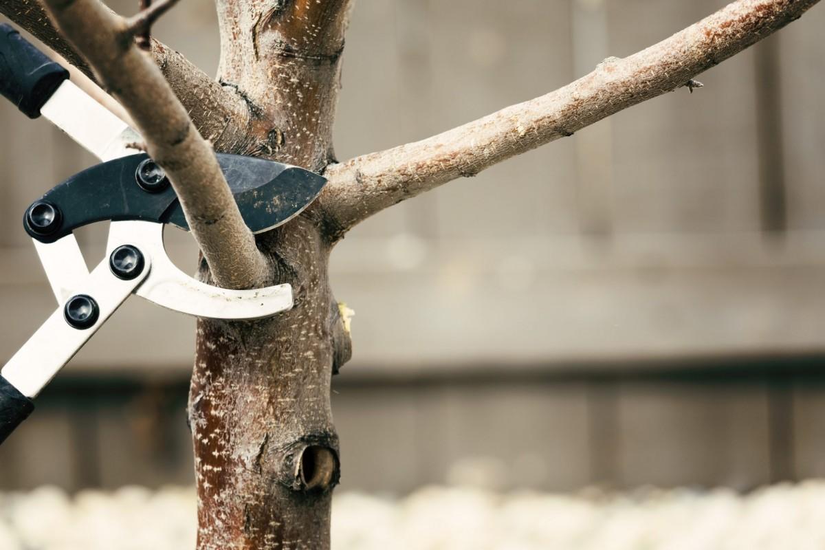 tree trimming in Parkton -- Keil Tree Experts