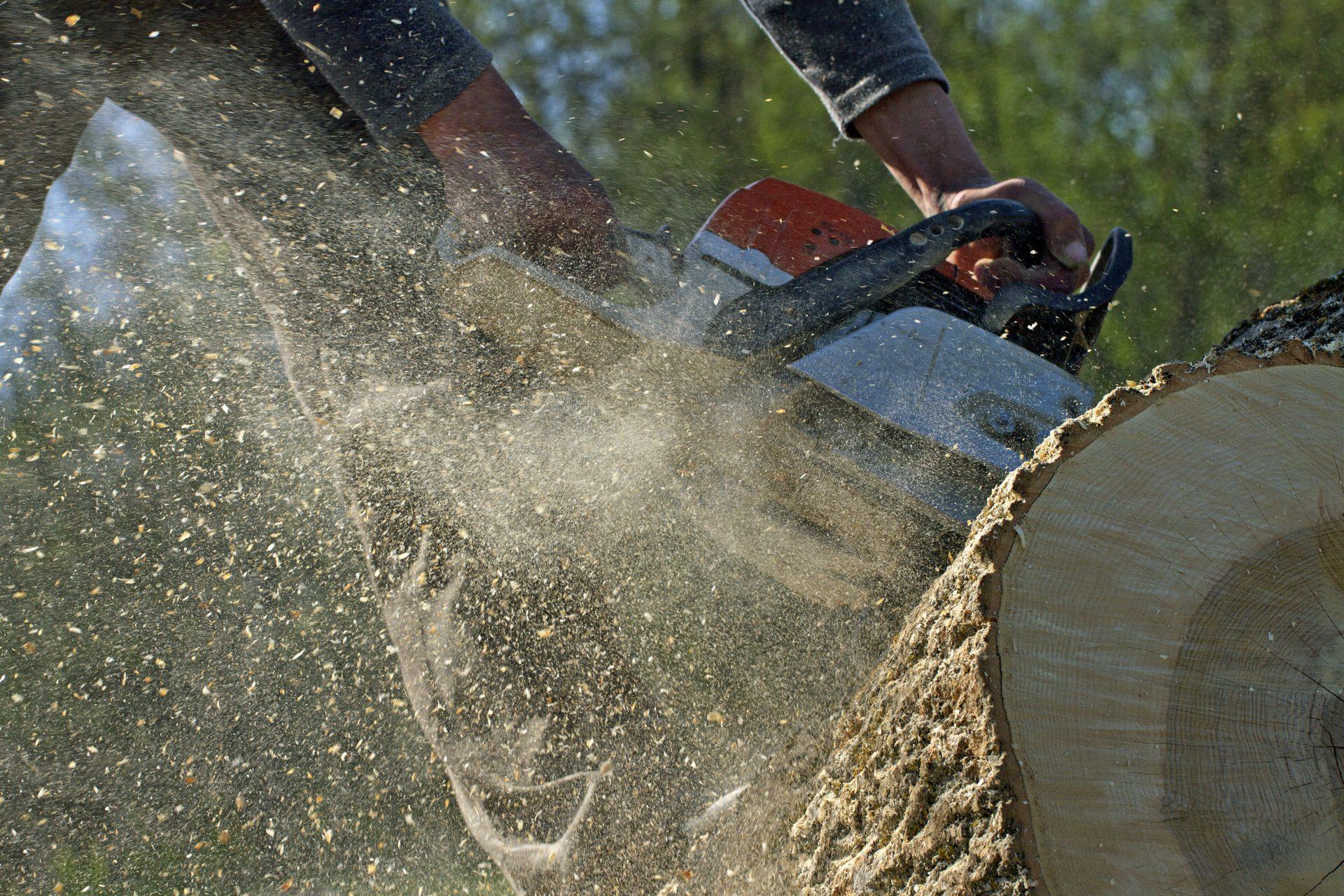 tree removal in Cockeysville -- Keil Tree Experts