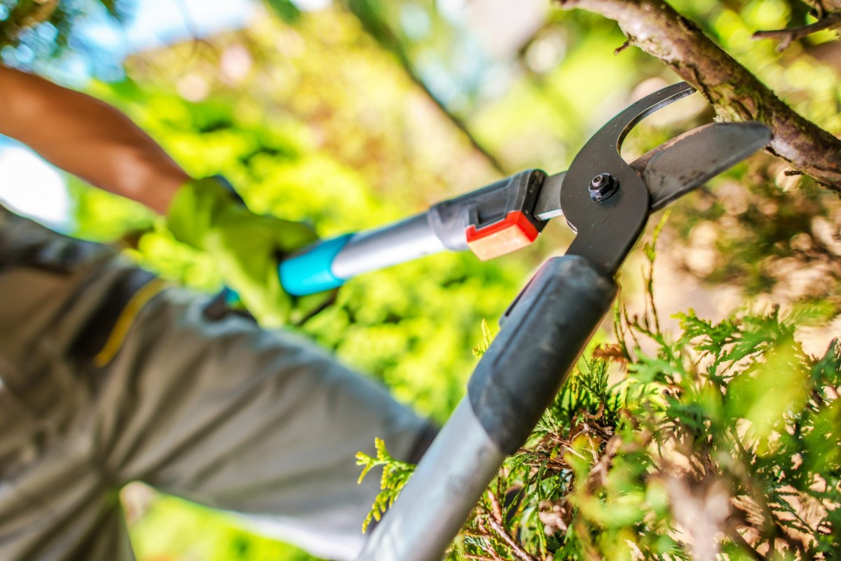 tree trimming in Jacksonville MD -- Keil Tree Experts