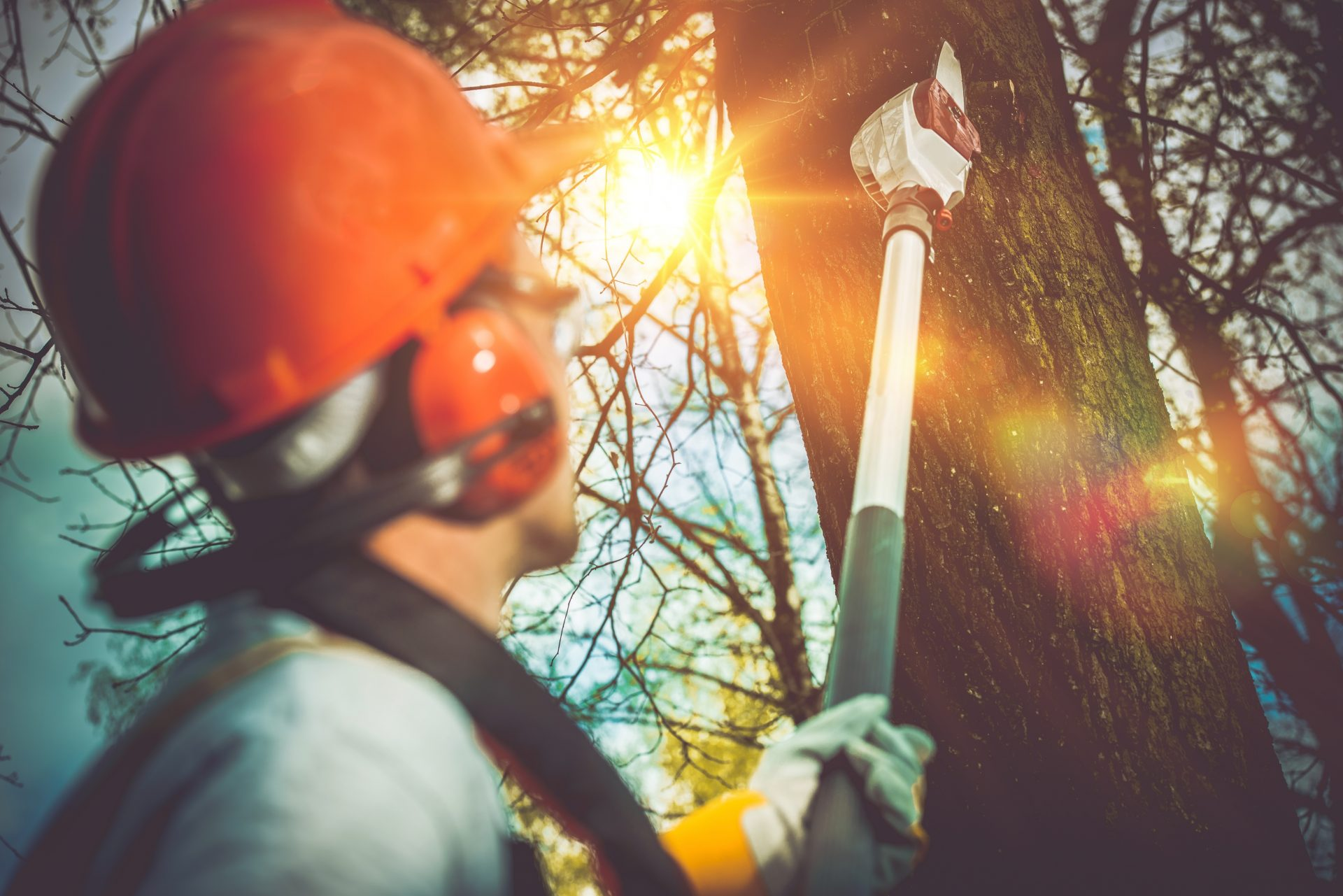 Professional Tree Removal Provides Peace of Mind
