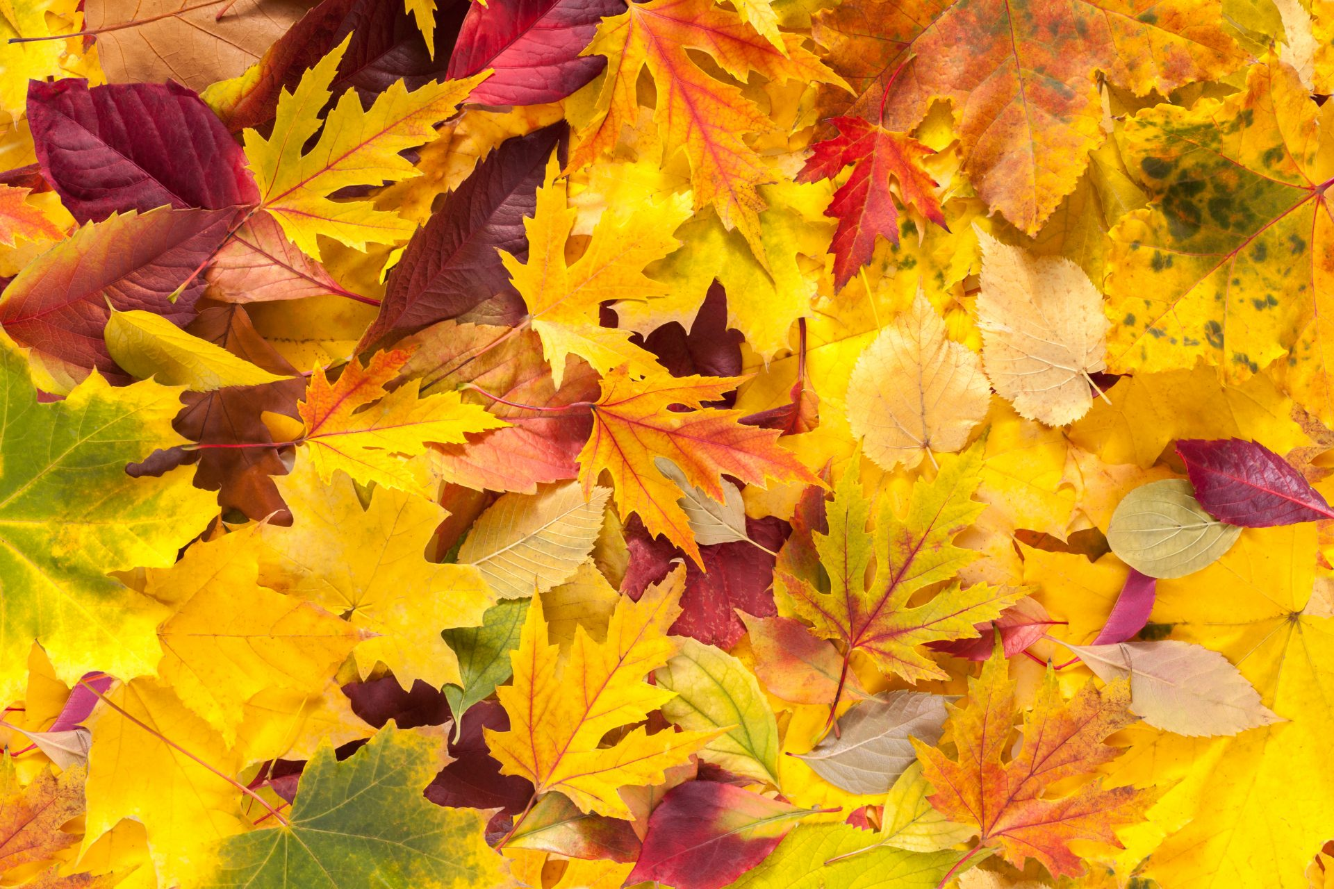 What are the Best Trees for Fall Color?