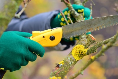 tree trimming in Ashland -- Keil Tree Experts
