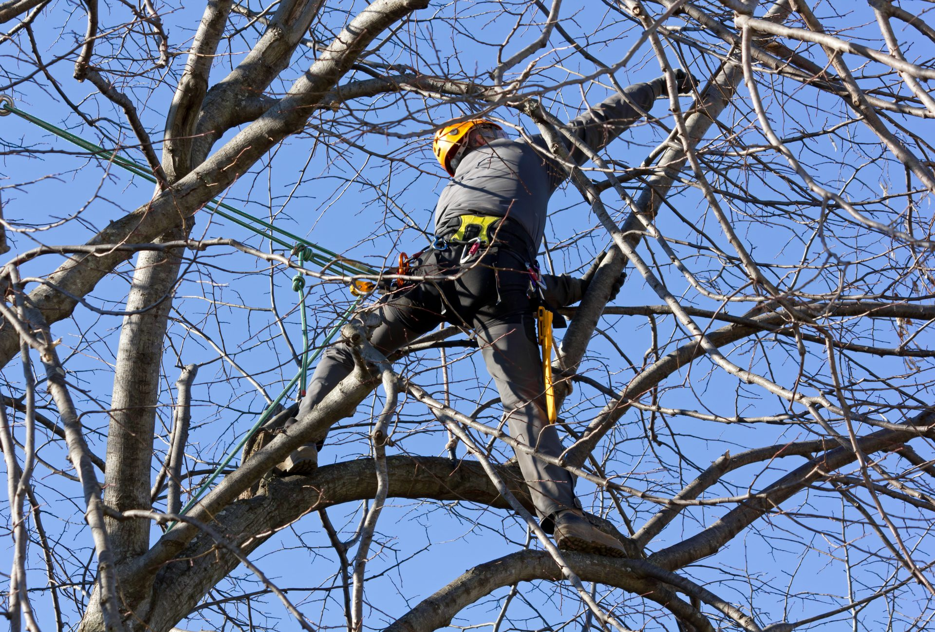 tree removal in Hereford MD -- Keil Tree Experts
