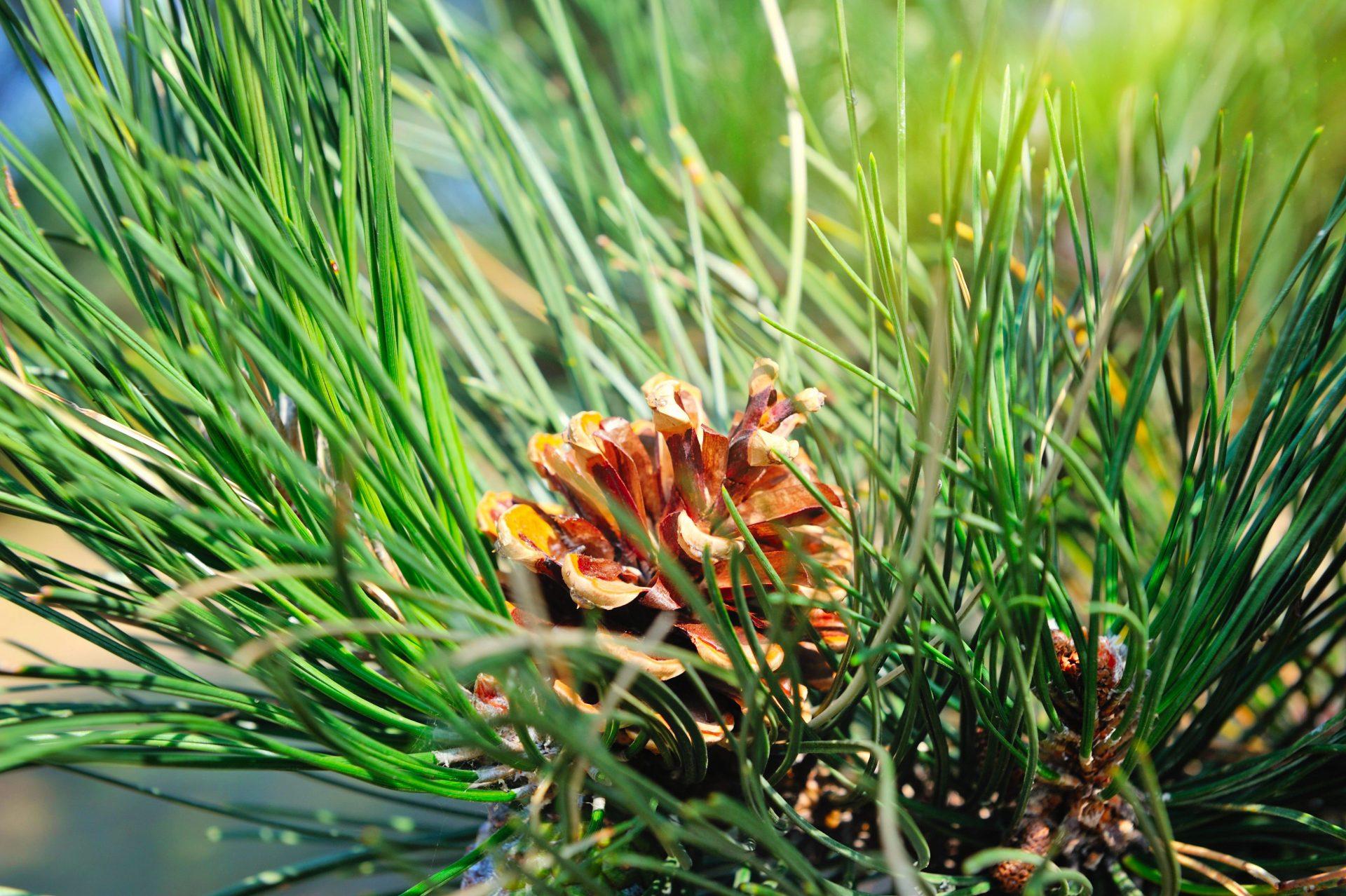 tree service in Monkton MD -- Keil Tree Experts
