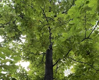 tree service Jacksonville MD -- Keil Tree Experts