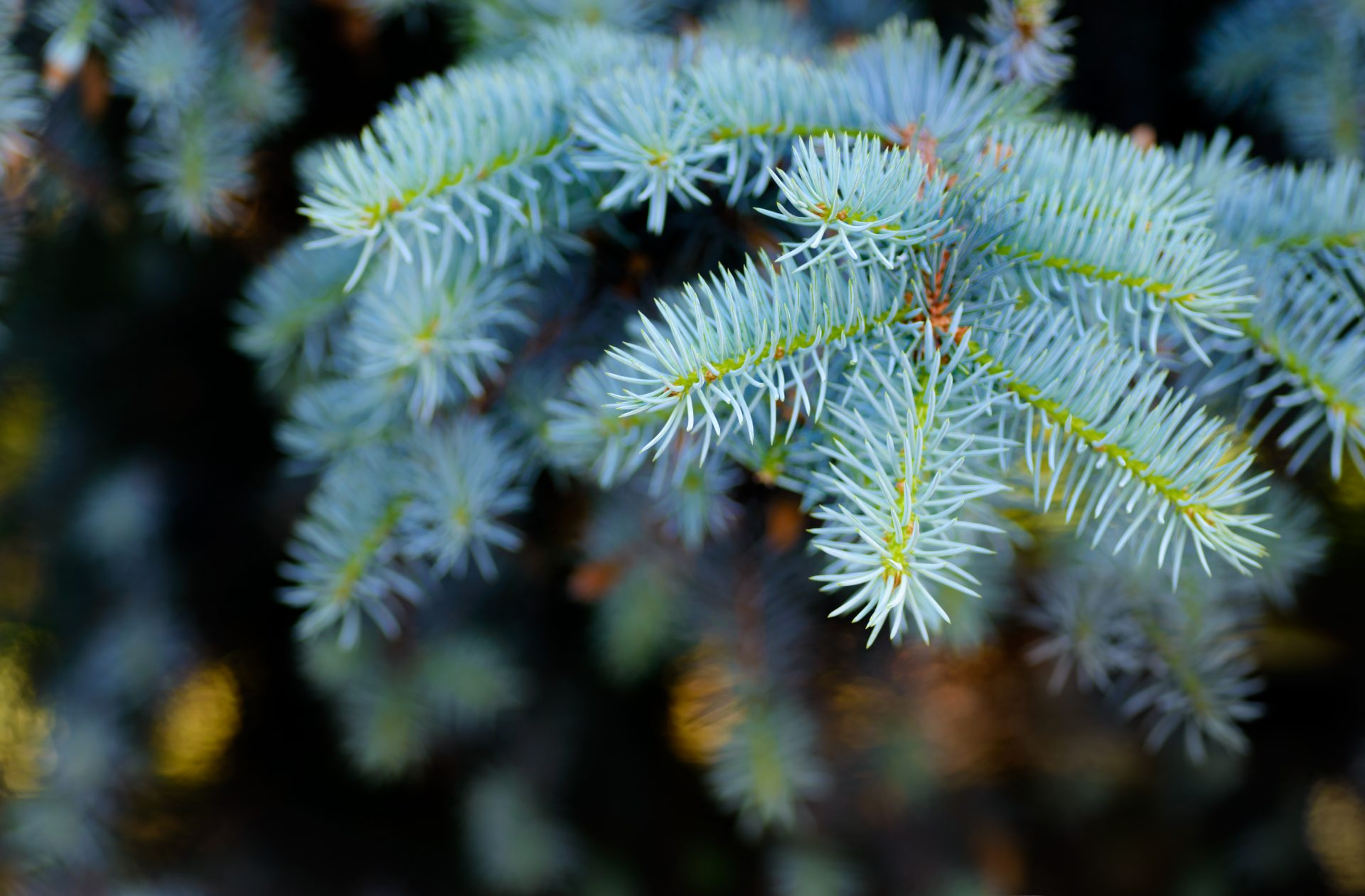 tree removal in Jarrettsville -- Keil Tree Experts