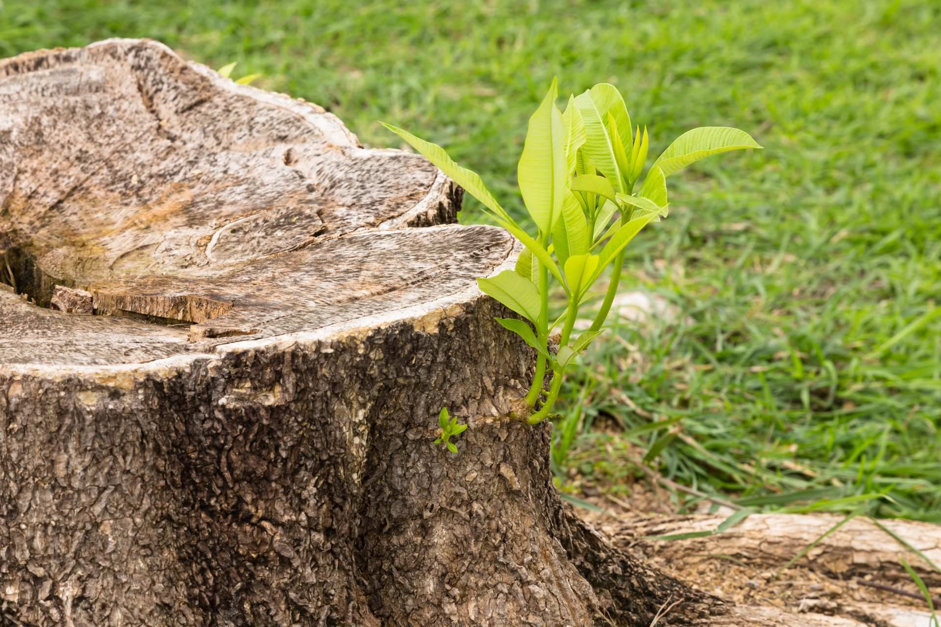 tree stump removal in Wiseburg -- Keil Tree Experts